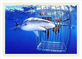 Shark cage tours in Ko Olina and the best Hawaii tour tickets discounts.